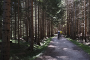22nd Aug 2020 - Bicycles in the woods