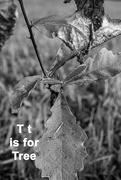 20th Aug 2020 - August Alphabet Words - Tree