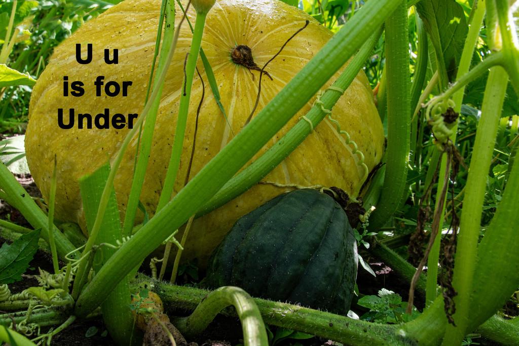 August Alphabet Words - Under by farmreporter