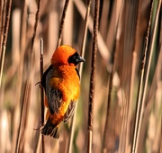 24th Aug 2020 - Red Bishop