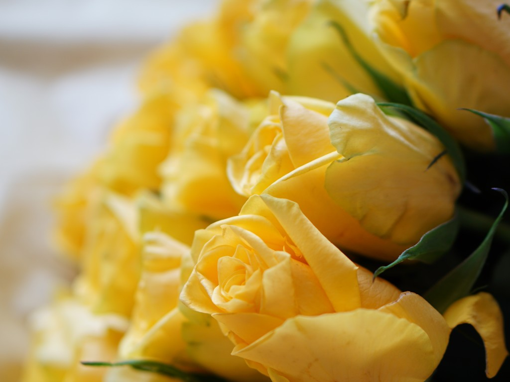 waterfall of golden roses by quietpurplehaze