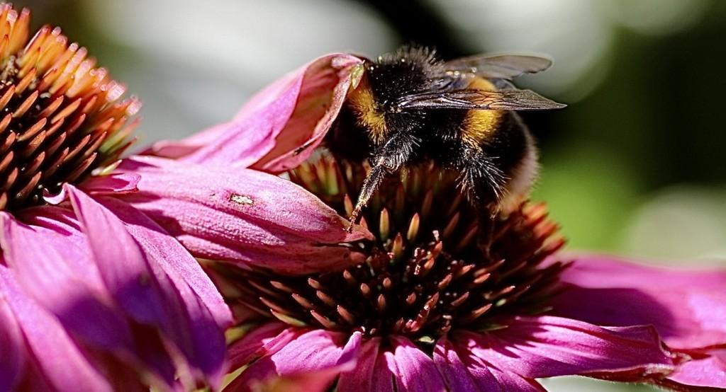 A Shy Bee? by carole_sandford