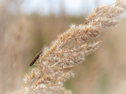 24th Aug 2020 - In the tall grass