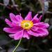 Anemone. by tonygig