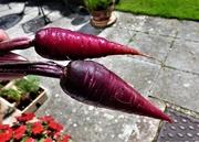 25th Aug 2020 - Purple carrots