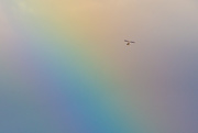 25th Aug 2020 - Flying through a Rainbow