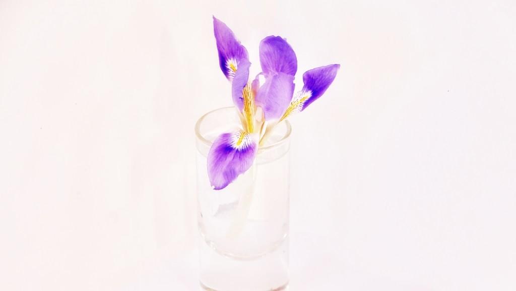 Tiny iris by maggiemae