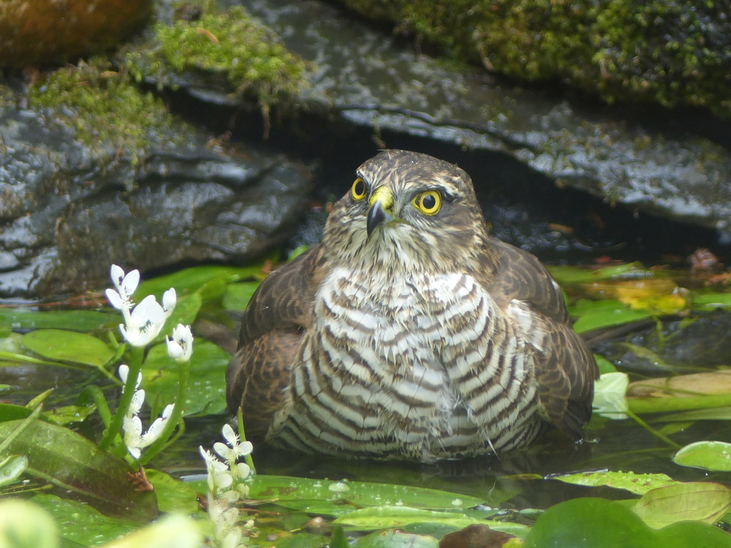 Visitor for a bath by judithdeacon