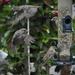 No shortage of sparrows by amyk