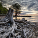 Twisted Lake Driftwood by pdulis