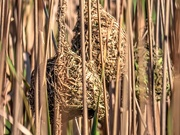 27th Aug 2020 - Their well hidden nests