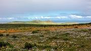 27th Aug 2020 - Postberg nature reserve