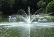 27th Aug 2020 - Fun on the lake