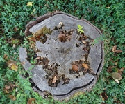 28th Aug 2020 - stump