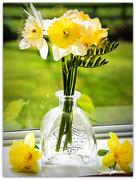28th Aug 2020 - Daffodil Day 2020