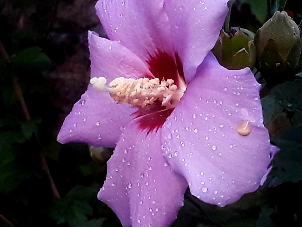 Fuchsia Flower by linnypinny