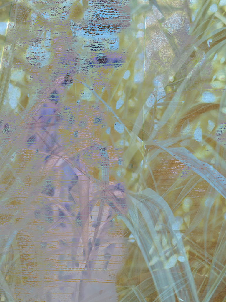 yukka by pistache