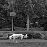 27th Jul 2020 - Hang-dog