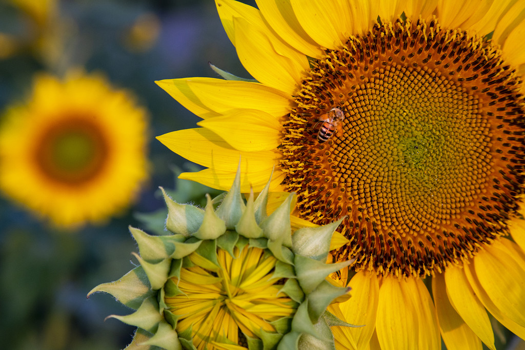 The Sunny Side of Life ... by pdulis
