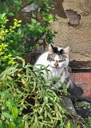 28th Aug 2020 - Lucy in the garden