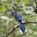 Such a beautiful bird by fayefaye
