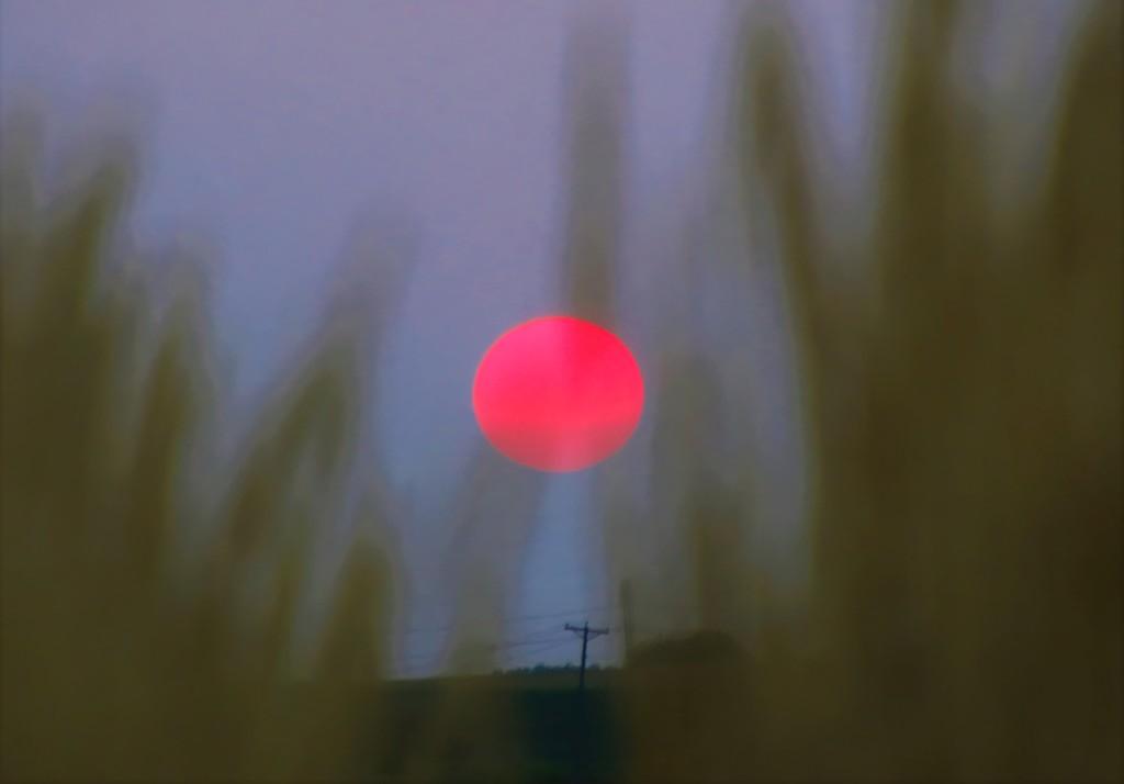 The Sun by lynnz