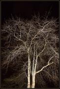 29th Aug 2020 - Winter trees