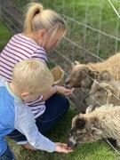 25th Aug 2020 - Feeding time at the farm