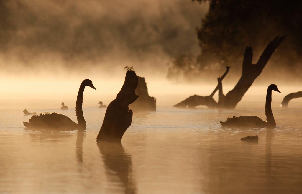 Fog grace by flyrobin