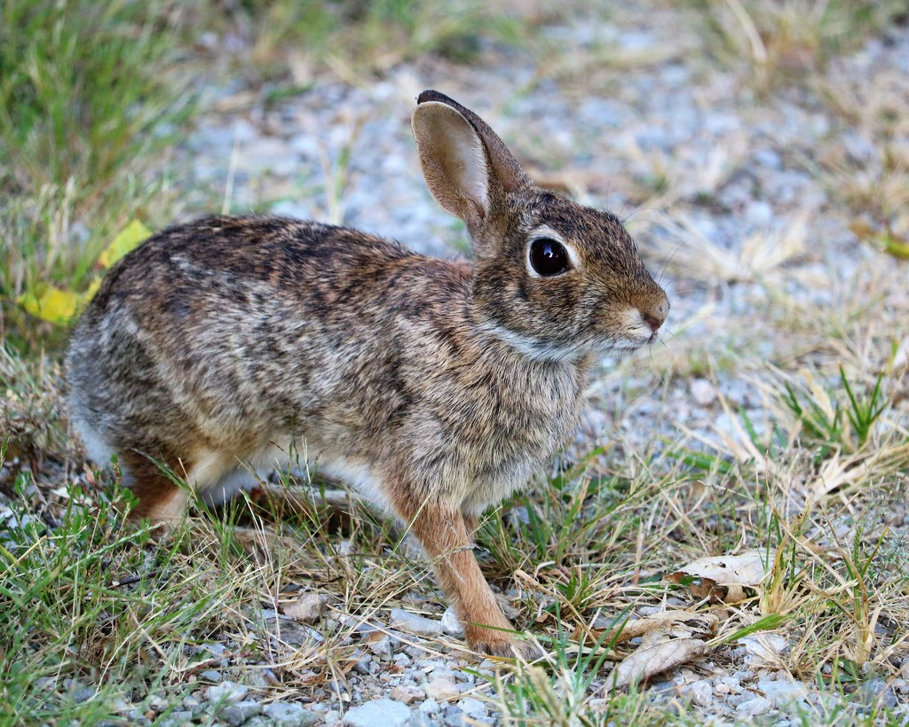 August 27: Rabbit by daisymiller