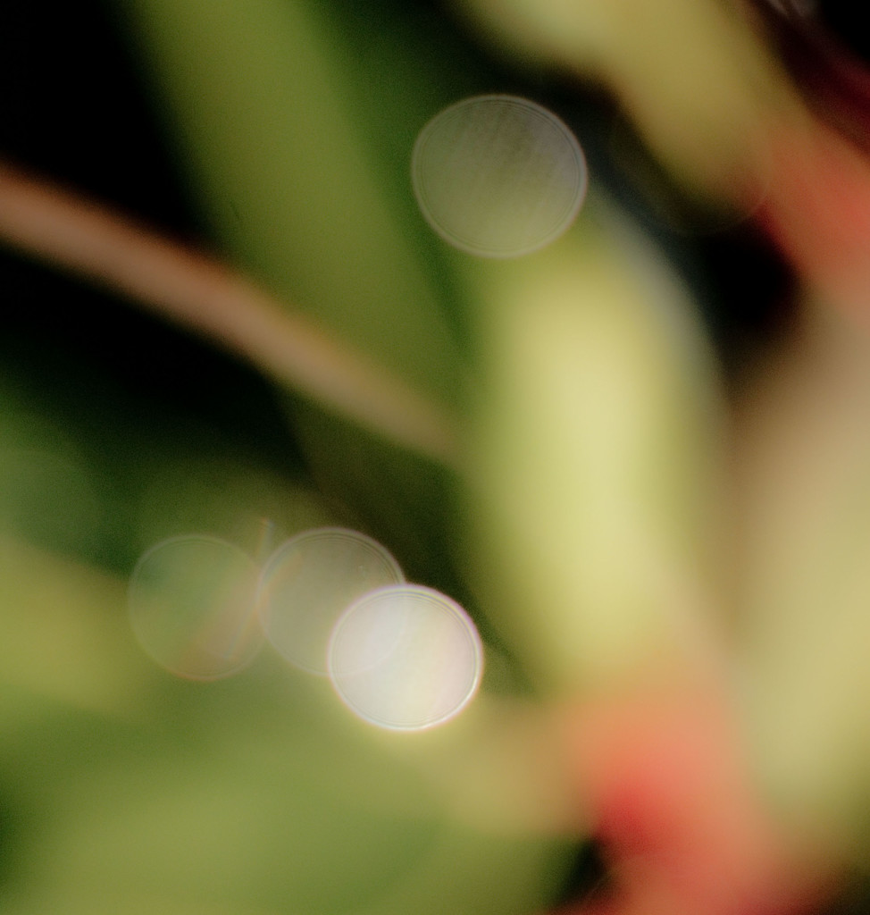 Garden Abstract 5 by annied