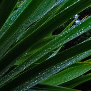 5th Aug 2020 - Still raining