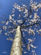 1st Sep 2020 - Spring Has Sprung🌸