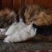 Sleepy Jasmine by bjywamer