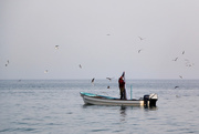1st Sep 2020 - Fishing #2
