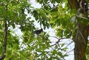 1st Sep 2020 - Blue Jay