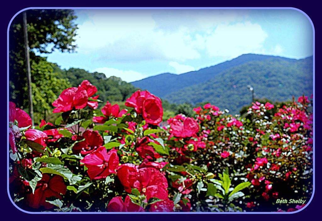 Flowers in the Blueridge by vernabeth