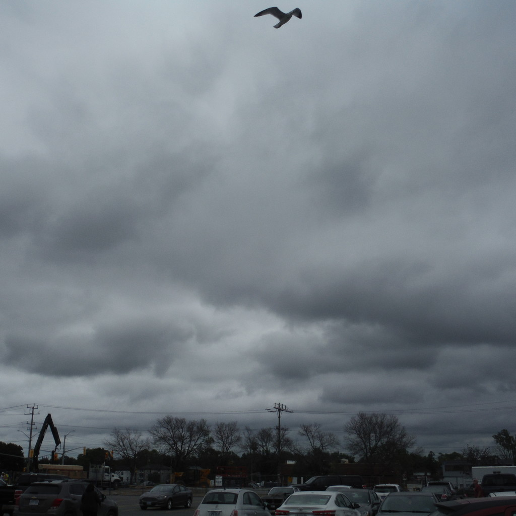 Stormy Cloudscape, with Seagull by spanishliz