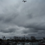 1st Sep 2020 - Stormy Cloudscape, with Seagull