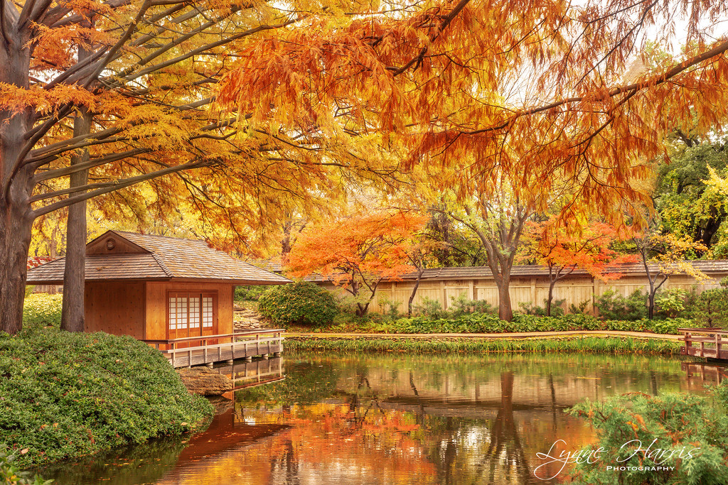 Who is ready for Autumn in Texas? by lynne5477