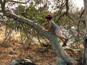 1st Sep 2020 - Climbing Trees