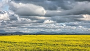 2nd Sep 2020 -  Canola fields and storm clouds