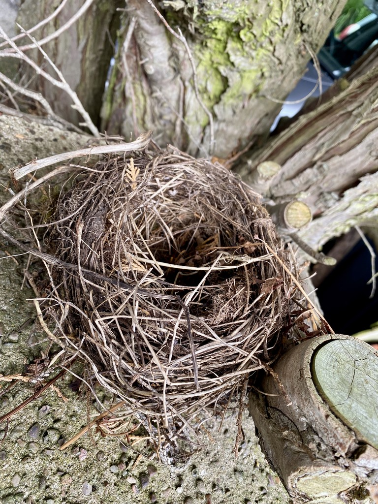 Nest by tinley23