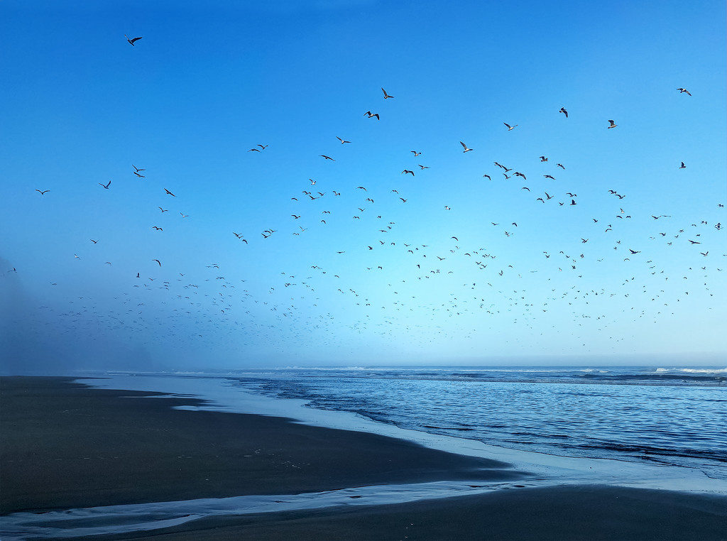 Seagulls Flying Out of the Mist  by jgpittenger