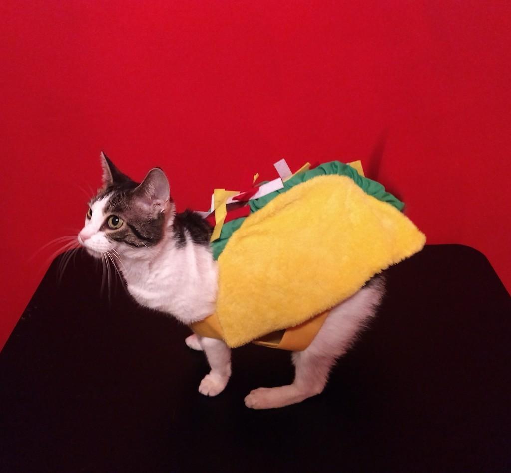 Taco Cat by cjwhite