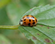 2nd Sep 2020 - Ladybug Love