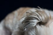 2nd Sep 2020 - ear fur