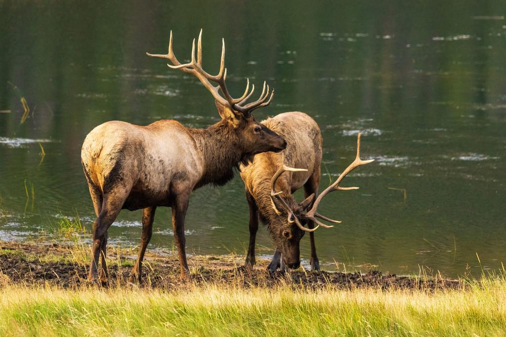 Rocky Mountain NP Wildlife by photograndma