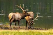 3rd Sep 2020 - Rocky Mountain NP Wildlife