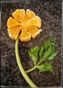 3rd Sep 2020 - Orange Flower